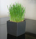 Cubi-Grow hydroponic planter in matte charcoal